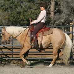 Stop Your Horse Without Pulling on the Reins
