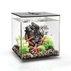 Tucker Murphy™ Pet Alan 20 Gallon Tower Square Aquarium Tank | Wayfair 60 Liter Aquarium, Mini Aquarium, Aquarium Kit, Different Fish, Aquaponics System, Aquaponics Garden, Aquaponics Fish, Indoor Aquaponics, Products