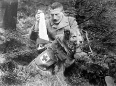 Bandages retrieved from the kit of a British Dog