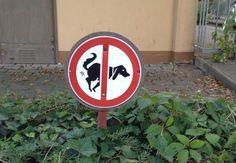 Poop? Or no poop? dog poop for composting?