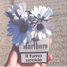 Shared by Dark Paradise. Find images and videos about grunge, flowers and hipster on We Heart It - the app to get lost in what you love. Cigarette Quotes, Smoking Is Bad, Doodle Paint, Fiji Water Bottle, Insta Photo Ideas, Soft And Gentle, Aesthetic Pastel Wallpaper, Flower Quotes, Soft Colors