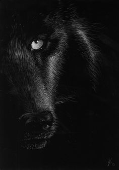 Wolf Scratchboard by AzzWrath on deviantART