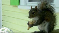 Squirrel Gets Ice Cream Every Day - Neatorama