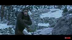 Caeser in War for the Planet of the Apes  ❤❤❤❤ #Caeser #warfortheplanetoftheapes  #planetapes50th #apestogetherstrong