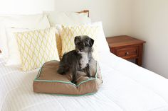 """pippi on a 'wild horses' petite square (20"""" x 20"""") dog bed duvet. if she's going to get on the bed anyway, she might as well have her own spot ;)"""