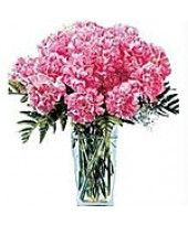 Are you searching 12 beautiful pink carnations in a good vase? Just look at FlowerzNCakez, India. Buy Flowers Online, Online Flower Shop, Flower Delivery Service, Online Flower Delivery, Romantic Valentines Day Ideas, Online Florist, Pink Carnations, Fresh Flowers, Valentine Day Gifts
