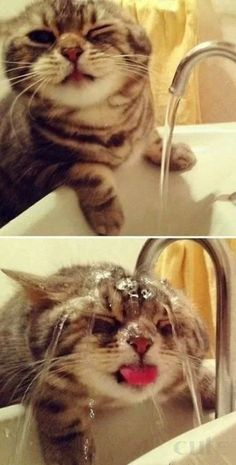 45 Pictures of Cats being Naughty