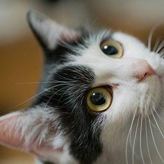 うみ。 α7R2が素晴らしいパフォーマンスを発揮してくれるけどインスタで見ても意味ないなw  #うみ #猫 #愛猫 #cat #ソニー #sony #α7rii  #タムロン #tamron #90mm #タムキュー #カメラ好きな人と繋がりたい  #写真好きな人と繋がりたい  #ファインダー越しの私の世界