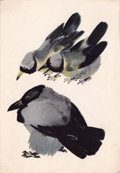 E. Charushin Crow and Jackdaws Postcard by RussianSoulVintage