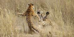 2014 National Geographic photo winners.