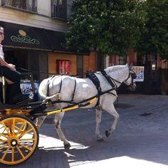 ¡Disfruta con la tarjeta gratuita #Sevilla Fidelio de ventajas y descuentos en más de 180 establecimientos!