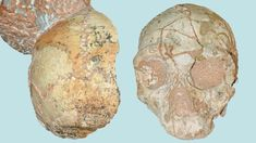 A skull is the oldest Homo sapiens fossil found outside Africa. Apidima 1 Is the Oldest Human Fossil Outside Africa - The Atlantic