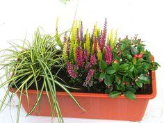 iiddeeaa.com a 2017 04 winterharte-balkonpflanzen-kleines-buntes-balkonpflanzen-set-fr-balkonkasten-40-cm-lang-7-900x675.jpg
