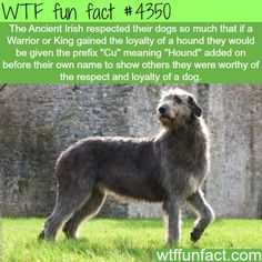 WTF Fun Facts is updated daily with interesting & funny random facts. We post about health, celebs/people, places, animals, history information and much more. New facts all day - every day! Dog Facts, Animal Facts, Wtf Fun Facts, Funny Facts, Random Facts, Funny Animals, Cute Animals, Purebred Dogs, History Facts