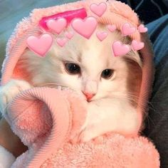 Funny Cute Cats, Cute Baby Cats, Cute Cats And Kittens, Cute Funny Animals, Kittens Cutest, Cute Babies, Funny Cat Wallpaper, Cute Panda Wallpaper, Cute Cartoon Wallpapers