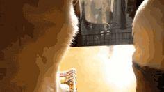 hey, hey...hey, hey...HEY! | 12 Funny Cat GIFs (Plus A Bonus Video)