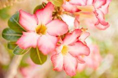 #Pink #Flowers make #EsperanzaResort enchanted.