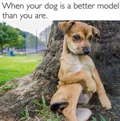 Love Cute Animals shares pics of playful animals, cute baby animals, dogs that stay cute, cute cats and kittens and funny animal images. Funny Dog Memes, Funny Animal Memes, Cute Funny Animals, Cute Baby Animals, Funny Dogs, Fluffy Animals, Cute Animal Quotes, Funny Sarcasm, Animal Humor