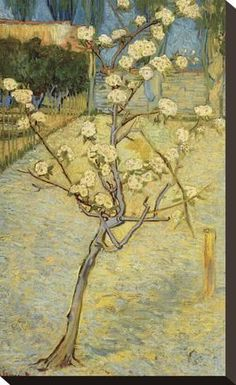 Stretched Canvas Print: Small Pear Tree in Blossom Canvas Print by Vincent van Gogh : 16x10in