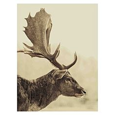 Stag Off (Right) Canvas Print by Hoxton Art House