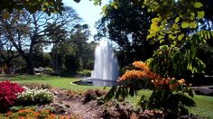 Take a walk through the George Brown Darwin Botanic Gardens to see a magnificent display of plants from northern Australia and tropical areas around the world. Darwin, Amazing Gardens, Botanical Gardens, Tourism, Things To Do, Waterfall, Australia, City, Brown