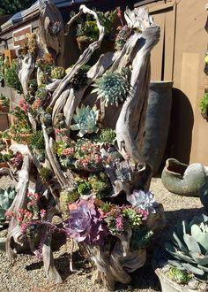 Succulent Care, Succulent Planters, Succulent Arrangements, Succulents Garden, Underwater Plants, Miniature Gardens, Balcony Garden, Terrariums, Yard Ideas