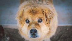 Veja como ajudar animais abandonados doando uma nota fiscal
