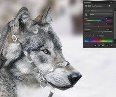 How to Create a Fantasy Wolf Rider Photo Manipulation in Adobe Photoshop Wolf Rider, Fantasy Wolf, Photo Restoration, Photo Manipulation, Adobe Photoshop, Cool Photos, Adventure, Tutorials, Animals