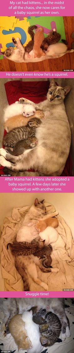 Funny pictures about Mama Cat and her adopted squirrels. Oh, and cool pics about Mama Cat and her adopted squirrels. Also, Mama Cat and her adopted squirrels. Animals And Pets, Baby Animals, Funny Animals, Cute Animals, I Love Cats, Crazy Cats, Cute Cats, Animal Pictures, Funny Pictures
