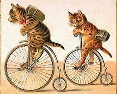 VELOCIPEDE~Cat ride~☎ ☂ ⏅ ✈ ᓀ-ᓂ ✄ ♥¸¸.•*¨*•♫♪❥ (◕‿-) ❥☼☮♡✰❀ღ L☯✓ε
