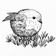 A little robin for my daily drawing 142   #dailydrawing #drawing #ink #inkdrawing #bird #birdstagram #ilovebirds #birdlover http://ift.tt/2kNsxHz A little robin for my daily drawing 142  dailydrawing drawing ink inkdrawing tumblr bird bir