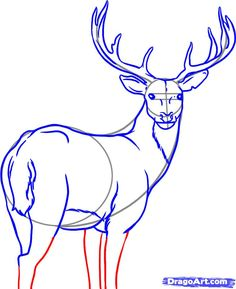 how to draw a white tailed deer step 6