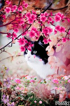 GIFS ANIMADOS: GIFS DE GATITOS CON FLORES Cute Cats And Kittens, I Love Cats, Kittens Cutest, Beautiful Cats, Animals Beautiful, Beautiful Flowers, Kitten Images, Random Gif, Good Night Sweet Dreams