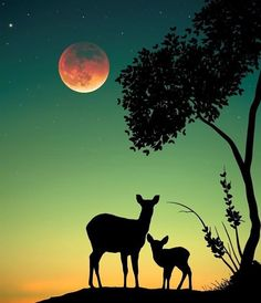 How lovely are Abdullah Evindar mixed media collages! In this series the artist combined silhouettes with nature and landscapes. Working in both analog and… Silhouette Photography, Moon Photography, Moonlight Photography, Beautiful Nature Wallpaper, Beautiful Moon, Hirsch Silhouette, Natur Wallpaper, Silhouette Painting, Art Africain