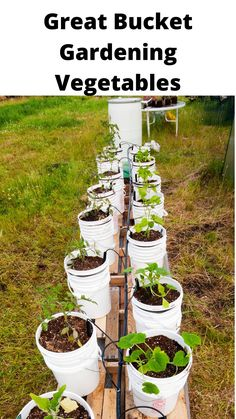 Backyard Garden Landscape, Large Backyard, Home Landscaping, Container Gardening Vegetables, Container Plants, Vegetable Garden, Bucket Gardening, Gardening Tips, Garden Projects