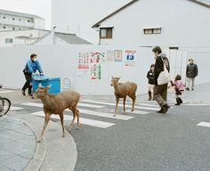 Traffic Rules (via kikuzumi)