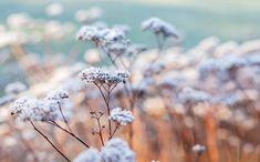 #poster #painting #nature #photography #winter #dream #dreambig #beauty #natural #Kaunisluonto #talvi #taulu