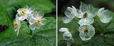 transparent flowers 4 (1)