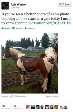 If you've seen a better photo of a cow photo bombing a horse stuck in a fence today I need to know about it.