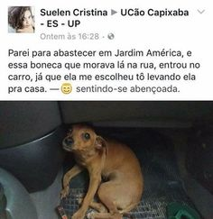O que cato pela internet Cut Animals, Animals And Pets, Sao Memes, Funny Memes, Happy Stories, Little Bit, Memes Status, Faith In Humanity, Baby Dogs