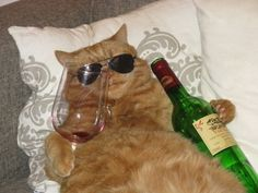 #9 of the list of things you never see in real life: A cat this drunk