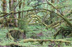 Trapper Creek, WA, along the Dry Creek trail