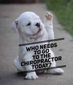 Just give us a call and we'll happily set up an appointment for you! For Ellicott City: For Clarksville Chiropractic Humor, Chiropractic Office Design, Chiropractic Therapy, Family Chiropractic, Chiropractic Center, Chiropractic Treatment, Chiropractic Adjustment, Set Up An Appointment, Health Quotes