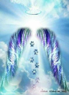 To all the fur babies who have gone to the rainbow bridge ~ Love you always. Miss you always. See you again someday.