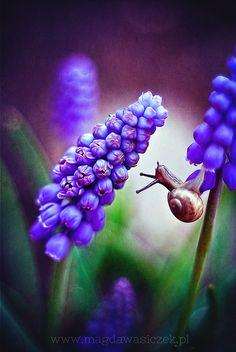 bitty snail on Muscari Wow Photo, Fotografia Macro, All Nature, Macro Photography, Belle Photo, Beautiful Creatures, Beautiful World, Reptiles, Mother Nature