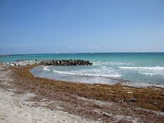 seaweed covered shore  Florida beach