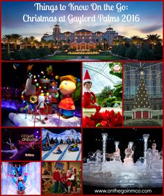 Things To Know On The Go: Christmas At Gaylord Palms