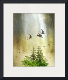 """""""swallows+at+the+waterfall""""+by+R+Christopher+Vest,+Dolores,+Colorado+//+a+beautiful+waterfall+crashes+down+above+telluride+colorado--+it+falls+so+far+it's+more+mist+than+torrent+by+the+time+it+reaches+the+bottom.+it+bathes+the+rocks+and+hot+hikers,+it+cools+the+day+and+cheers+the+heart--+if+you're+lucky+enough+to+be+in+the+spray.+and+so+the+swal...+//+Imagekind.com+--+Buy+stunning+fine+art+prints,+framed+prints+and+canvas+prints+directly+from+independent+working+artists+and+photographers."""