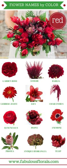 Wedding Trends How to DIY Wedding Flowers.How to make a Bouquet. Wedding Centerpieces and Flower Arrangements . Find out more at the image link. Red Wedding Flowers, Red Flowers, Spring Flowers, Wedding Colors, Wedding Bouquets, Red Flower Names, Red Wedding Centerpieces, Red Flower Bouquet, Wildflowers Wedding