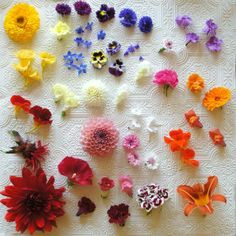 Edible flowers from http://www.foragefor.co.uk/ #britishflowers